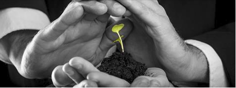 seed in hands image-1